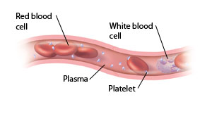 Cross section of vessel showing normal blood cells.