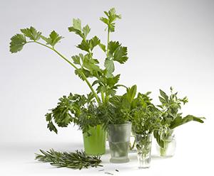 Assortment of fresh herbs.