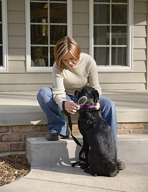 Woman brushing dog outdoors.