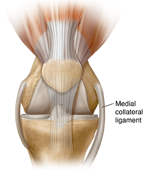 Front view of knee joint.
