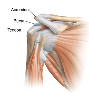Front view of shoulder joint with muscles.