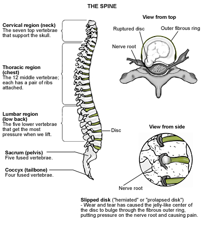 Illustration of spine