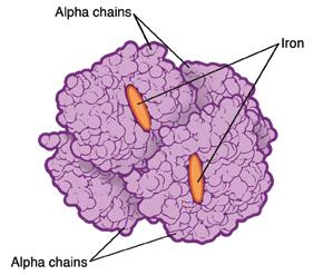 Structure of hemoglobin molecule with beta thalassemia.