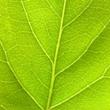 ../../images/ss_chlorophyll.jpg