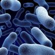 ../../images/ss_echinococcusgranulosus.jpg