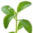 ../../images/ss_stevia2.jpg