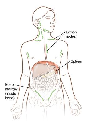 Outline of boy showing organs inside abdomen and outline of hip bone.