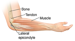 Side view of forearm with hand palm-side up, showing muscles and bones.