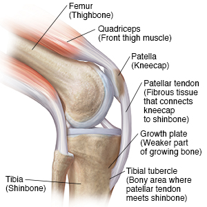 Understanding osgood schlatter disease anatomy staywell api web side view of bent knee showing quad muscles ccuart Choice Image