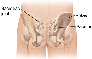 Back view of male buttocks with pelvic bones ghosted in.
