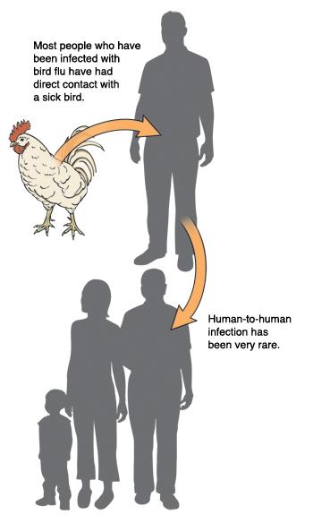 Bird Flu Avian Influenza Saint Luke S Health System