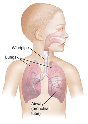 Your Childs Asthma What Happens In The Lungs Saint Lukes Health