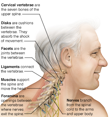 Know Your Neck The Cervical Spine Saint Lukes Health System