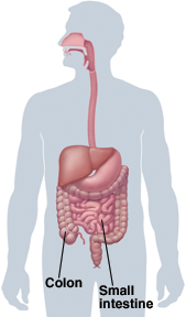 Image of colon and small intestine