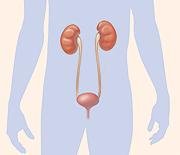 Identifying Kidney visual representation