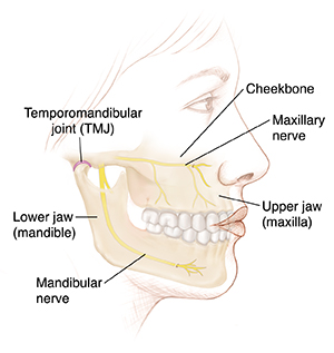 Side view of woman's face showing jawbones and temporomandibular joint.