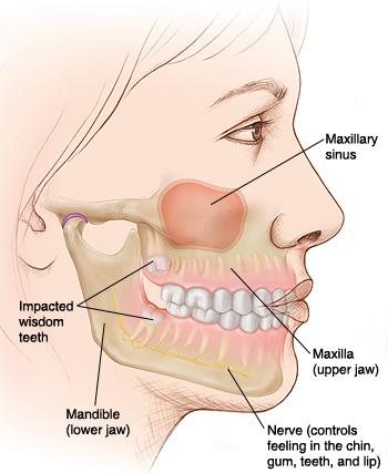 Understanding Wisdom Teeth Saint Lukes Health System
