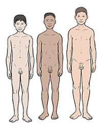Opinion the puberty development of the penis opinion you