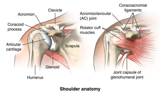 Facts About the Spine, Shoulder, and Pelvis | Health Resources ...