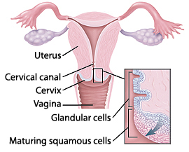 in vagina cells Glanular