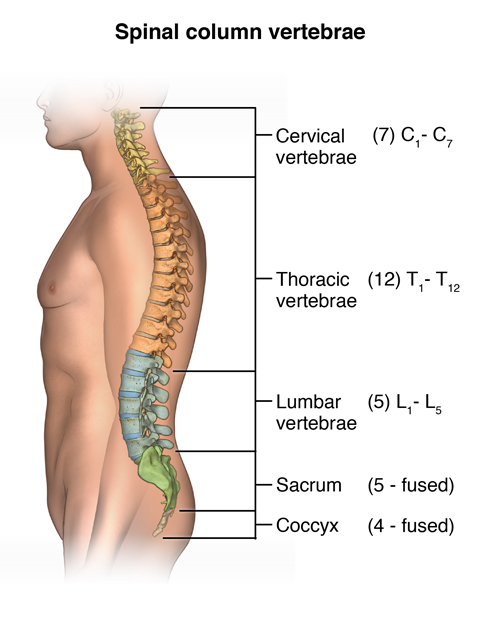 X Rays Of The Spine Neck Or Back A Womans View Healthcare For