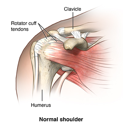 Shoulder Pain And Rotator Cuff Disorders Providence Oregon
