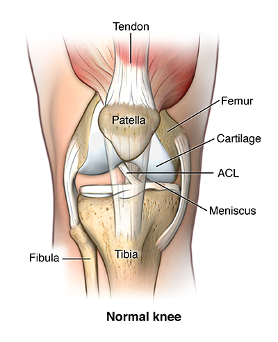 knee ligament repair | johns hopkins medicine health library, Human Body
