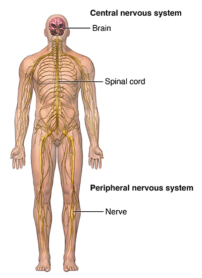 Image Central Nervous System