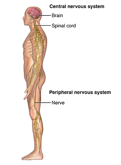 Spinal Cord Compression | Johns Hopkins Medicine Health Library