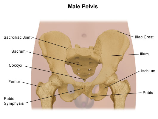 Pelvis Problems Loma Linda University Health